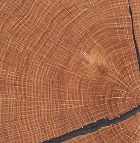 Průřez dubem
